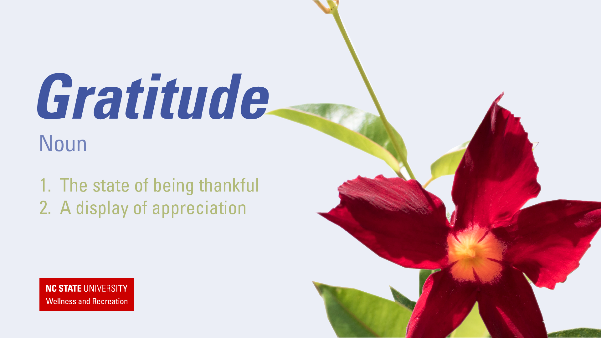 The Importance Of Gratitude Academic And Student Affairs News