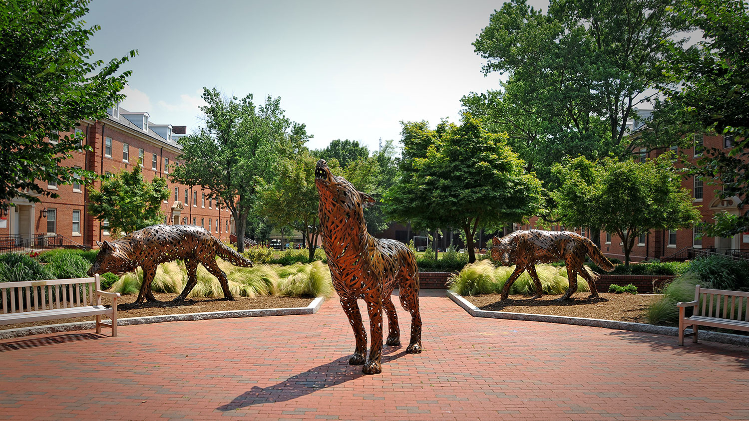 copper wolf sculptures on NC State's campus