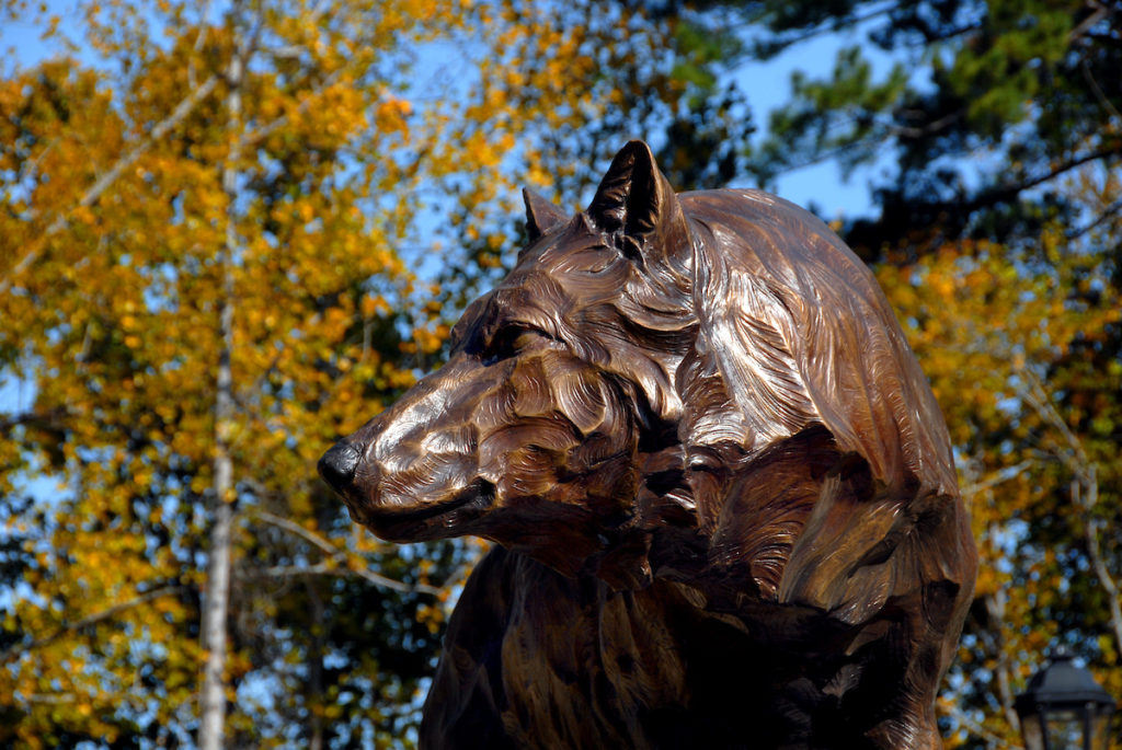 Wolf statue behind Park Alumni Center on Centennial Campus.