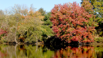 Photo of Lake Raleigh in the fall